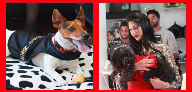 صورة افتتاح أول صالون خاص بحلاقة وتجميل الحيوانات !