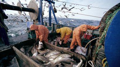 صورة أزيد من 693 مليون درهم قيمة مفرغات الأسماك بميناء سيدي إفني ما بين 2016 و2020