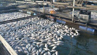 صورة سوس ماسة.. 38 مليون درهم لتثمين منتجات الأحياء البحرية