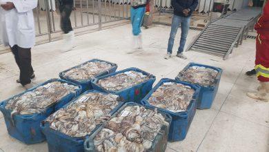 صورة طانطان..استئناف أنشطة صيد الأخطبوط ابتداء من 16 يونيو