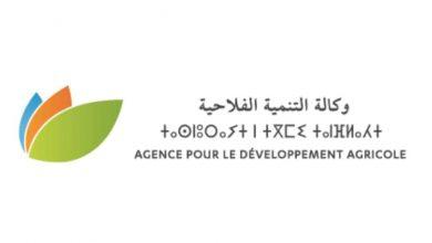 صورة وكالة التنمية الفلاحية.. التجميع الفلاحي إطار تنظيمي جديد يروم إرساء مشاريع من الجيل الجديد